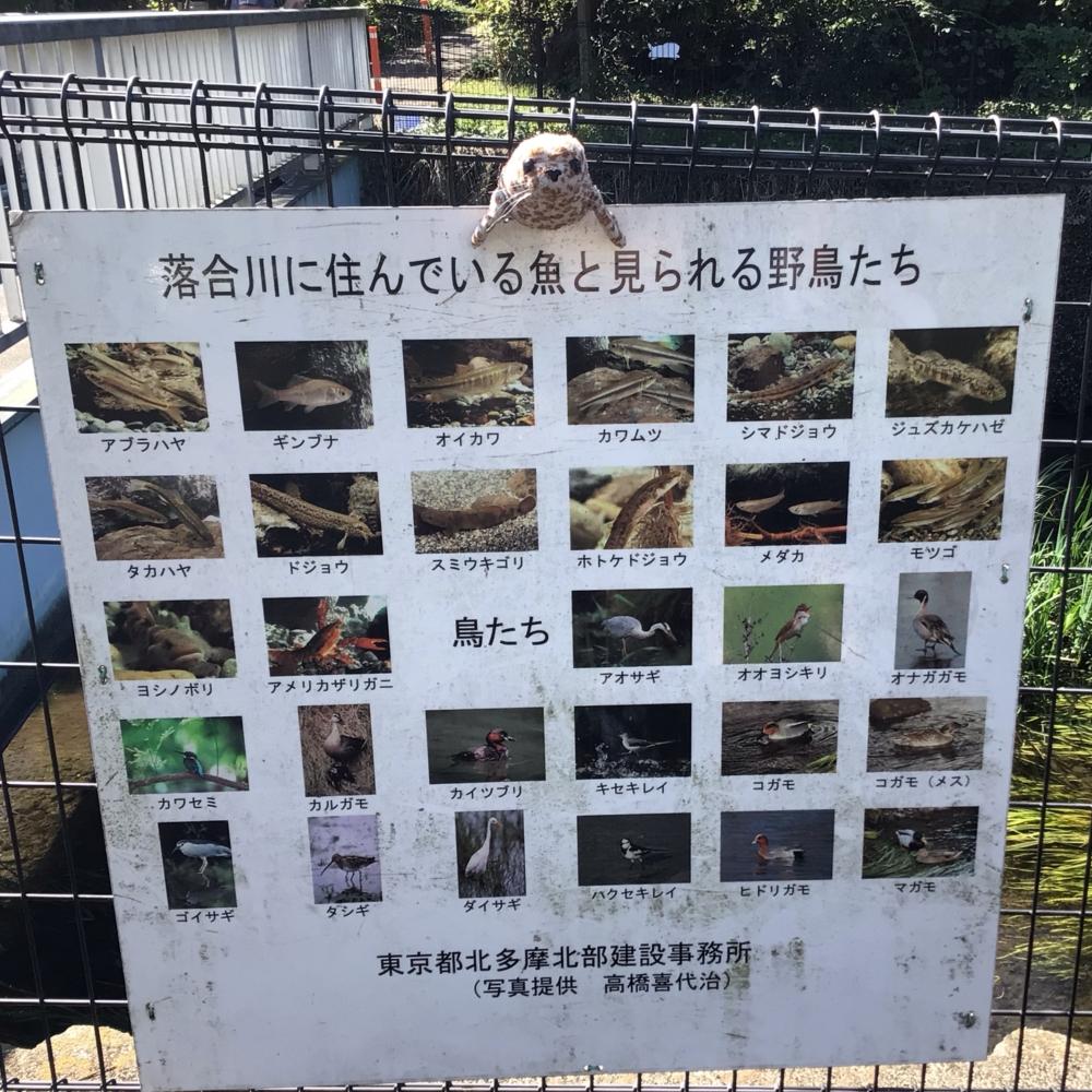 落合川の仲間達の画像
