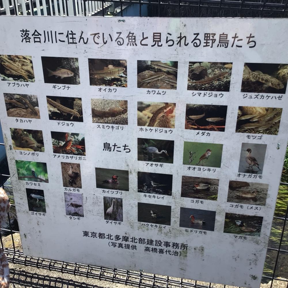 落合川に住む生き物の看板の画像